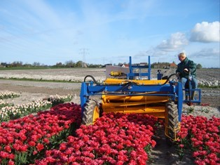 Kopmachine voor Wit Flower Bulbs B.V.